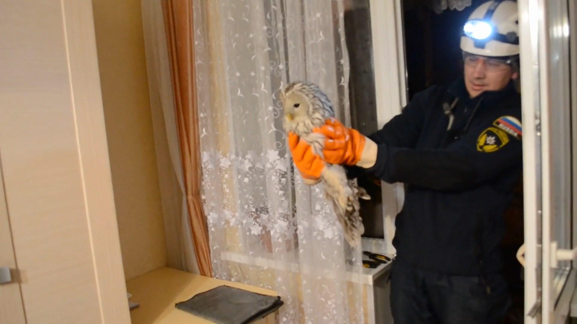 ВУфе к жителям многоэтажки залетела сова, помогли cотрудники экстренных служб